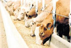 Süt-yem dengesi  üretimi zorluyor