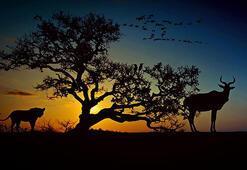 İnsanlık 44 yılda hayvanların yüzde 60ını yok etti