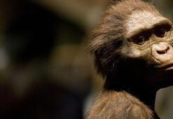 Kenyada evrende yaşamış en küçük maymun fosili bulundu