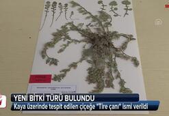 Dünyada sadece Türkiyede var Sayı 130a çıktı...