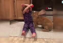 Dev tavşan ile küçük kızın dostluğu güldürdü