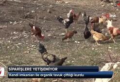 Kendi imkanları ile organik tavuk çiftliği kurdu
