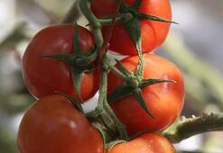 Rusyadan flaş Türk domatesi hamlesi