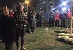 Ankaradaki köpek katliamı ile ilgili 3 hakkında flaş karar