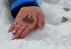 Yer Kars Kar üzerinden topladılar, böylesi ilk kez yaşandı...