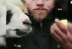 Rizeli gencin keçileriyle güldüren diyaloğu