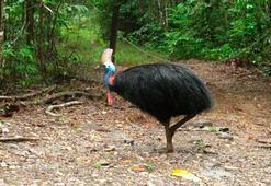 ABDde bir adam beslediği dev kuş tarafından öldürüldü