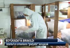Binlerce gladyatör İstanbula salınacak
