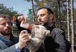Yavru  ayı besledi