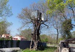 Ağaçların üzerinde 9 metre yükseklikte kulübe