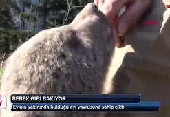 Boz ayı yavrusuna sahip çıktı