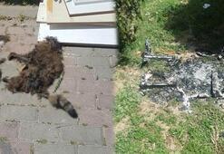 Bunun adı vahşet İçinde kedi varken yaktılar