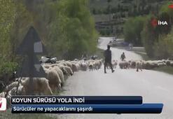 Koyun sürüsü karayoluna çıktı, sürücüler ne yapacağını şaşırdı