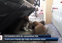5 yavru yeni yavru köpeği ağzı bağlı çöp poşetiyle attılar