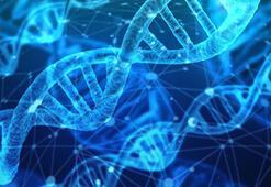 DNAnın açılımı nedir