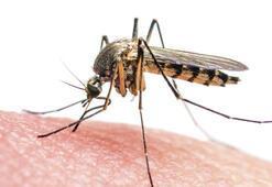 Zika, EBOLA 'bildirimi zorunlu' listesinde