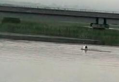 Gölde açılan uzaktan kumandalı teknesini almak isterken kayboldu