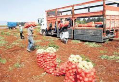 Sanayiye destek, gıdaya çare