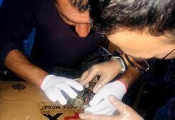 Kabuğu kırık kaplumbağa Cabbara kaportacıda operasyon