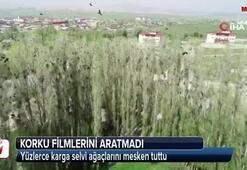 Sivasta korku filmlerini aratmayan görüntüler