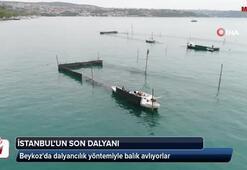 İstanbulun son dalyanı havadan görüntülendi