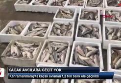 Kahramanmaraşta kaçak avlanan 1,2 ton balık ele geçirildi