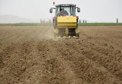 Niğdede patates ekim alanı arttı