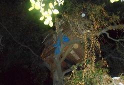 Ağaç evde yakalandı