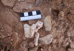 Denizli'de yaklaşık 9 milyon yıllık hayvan fosilleri bulundu