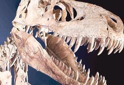 30 yıl önce bulunmuştu İki yeni türe ait olduğu ortaya çıktı...