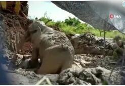 3 gün bataklıkta mahsur kalan fil kepçe ile kurtarıldı