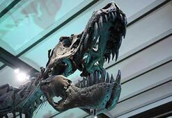 İki yeni dinozor türü keşfedildi