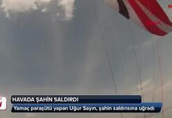 Havada şahin saldırdı