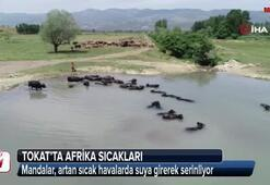Afrika sıcaklarında günü suda geçiriyorlar