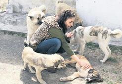 Sokak hayvanlarına popülasyon kontrolü