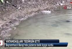 Bayramhacılı Barajında yüzlerce balık kıyıya vurdu