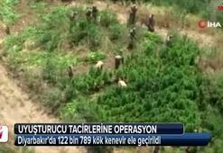 Diyarbakır'da 122 bin 789 kök kenevir ele geçirildi