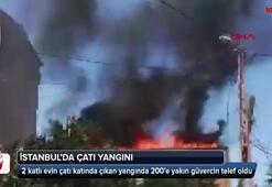 İstanbulda yangın... 200e yakın güvercin telef oldu