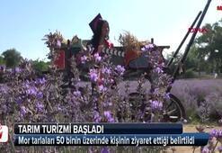 Edirnede lavanta tarlalarına 50 bin ziyaretçi