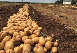 Türkiye, patates üretiminde dünyada ilk 10da
