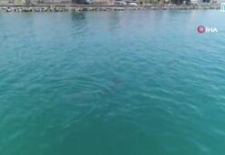 Sevimli yunuslar İstanbul boğazında havadan görüntülendi