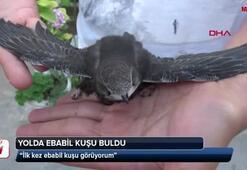 Yolda Ebabil kuşu buldu