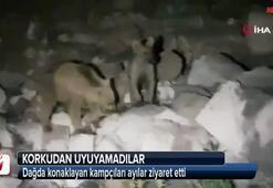 Dağda konaklayan kampçıları ayılar ziyaret etti