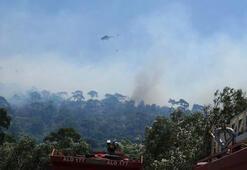 Balıkesirde korkutan orman yangını