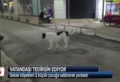 Sokak köpekleri 2 küçük çocuğa saldırarak yaraladı