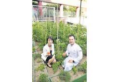 Bahçe ürünleri menülerde