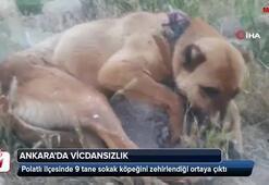 Vicdansızlık 9 köpeği zehirleyerek öldürdüler