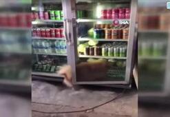 Sıcaktan bunalan köpek buzdolabına girdi