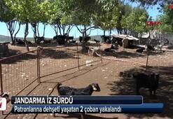 Patronlarına dehşeti yaşatan 2 çoban yakalandı