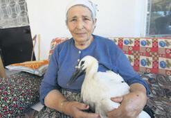 Leylek 'Efe'yi anne şefkatiyle iyileştirdi